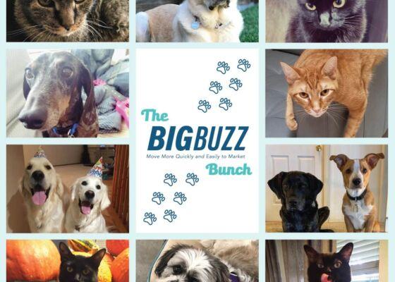 Big Buzz bunch